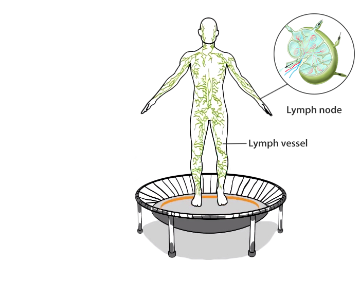 A graphic representation of the human lymphatic system