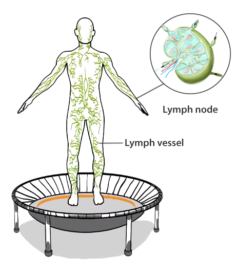 Lymphatic System: Active Waste Cleansing With Bellicon