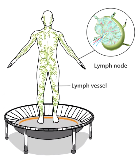 Activate the lymphatic system on the trampoline