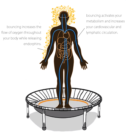 A graphic representation of the human organism exercising on a bellicon® mini trampoline